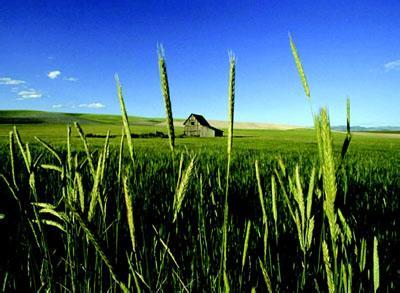 国外农业供应链的发展及其经验借鉴
