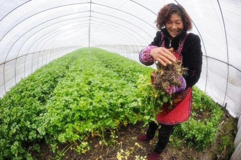 一周回顾|农业产业十大事件盘点:农技领域被资本看好;生鲜行业暗潮涌动