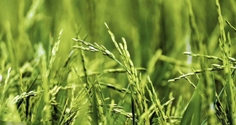 三农日报|光伏农业4种模式是什么;农业投资再遇良机;生鲜电商纷纷抢滩无人店