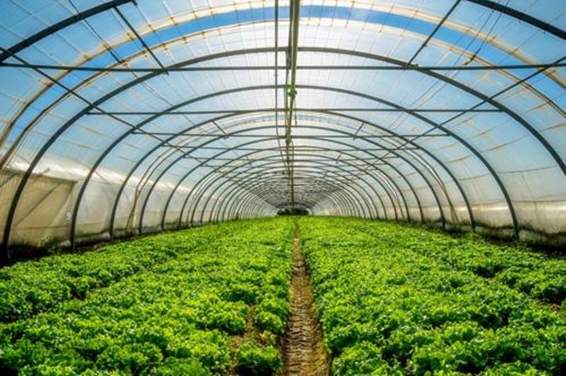 三农日报|中国农业机器人进入寡头时代;阿里巴巴高层探究生鲜电商难题如何解决