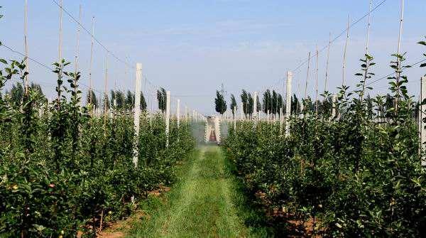 三农日报|养殖迈入产业智能化时代;生鲜供应链领域迎来巨头