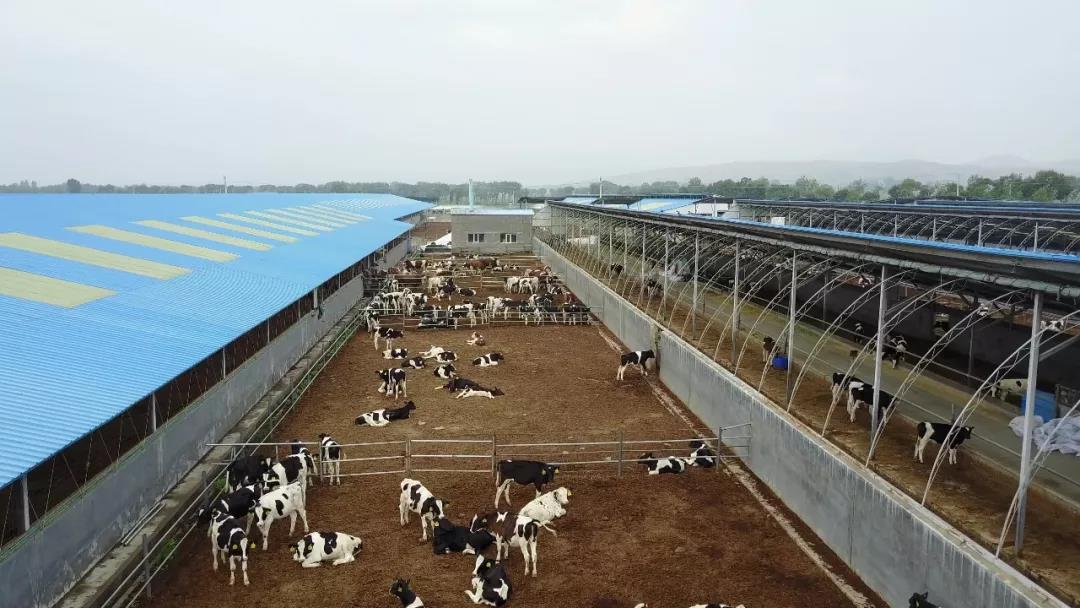 三农日报|专家:农业生产性服务业迎来历史机遇期;网易养猪或将扩大养殖规模