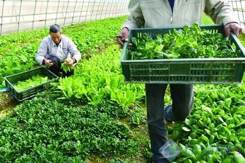农业产业周报|芭田股份、富邦公司、温氏股份最新动态;本周发生3笔融资事件