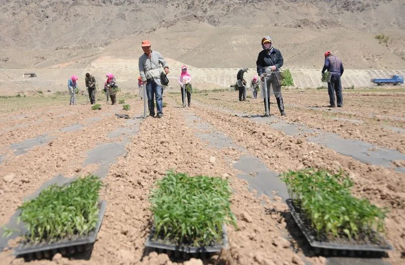 三农日报|多功能农业有利于国内经济大循环;业内人士:提高农业效益需要组织创新