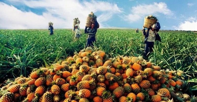 解析|农业的利润跑哪里去了?是一个值得反思的问题。