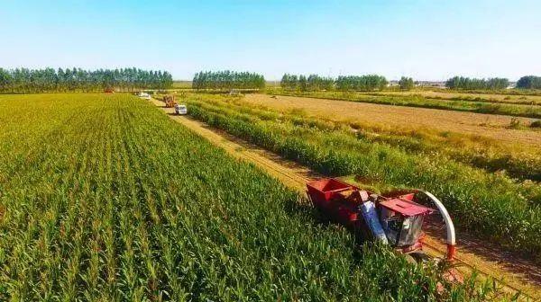 农业产业周报|天猫生鲜、隆平高科、双塔食品、周黑鸭最新动态