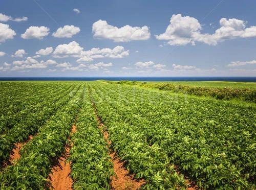 中国农业:有力量比有钱更有未来!