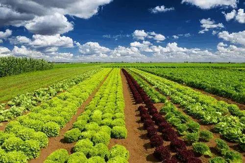 【深度观察】功能农业:未来高端食品的发展方向