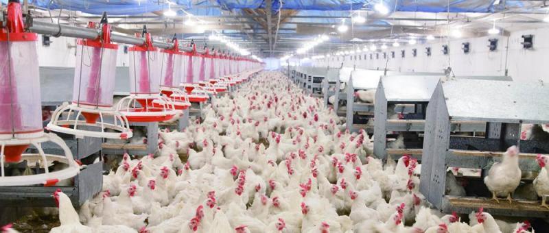 春雪食品:拟上交所上市募资8.51亿,发力智慧工厂