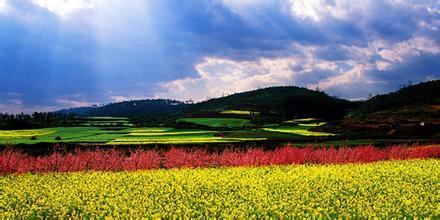 云南:高原特色农业如何打造?科技成为产业转折点