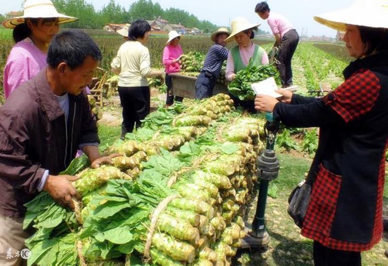 下半年主要农产品价格分析走势,农民们对此要提前了解!