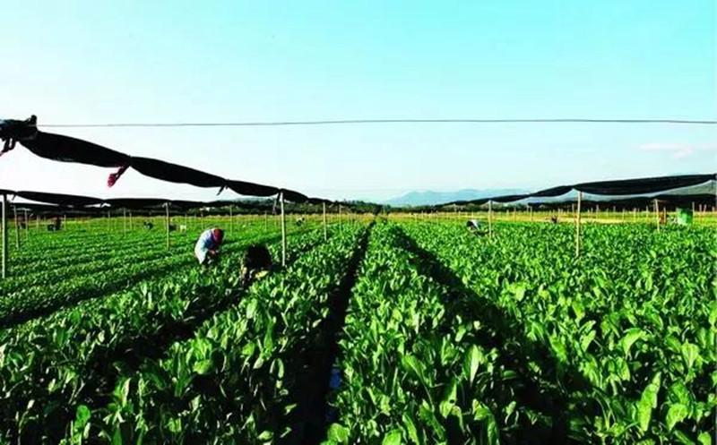 农产品价格翻十倍真相:原来只需遵循这三点原则