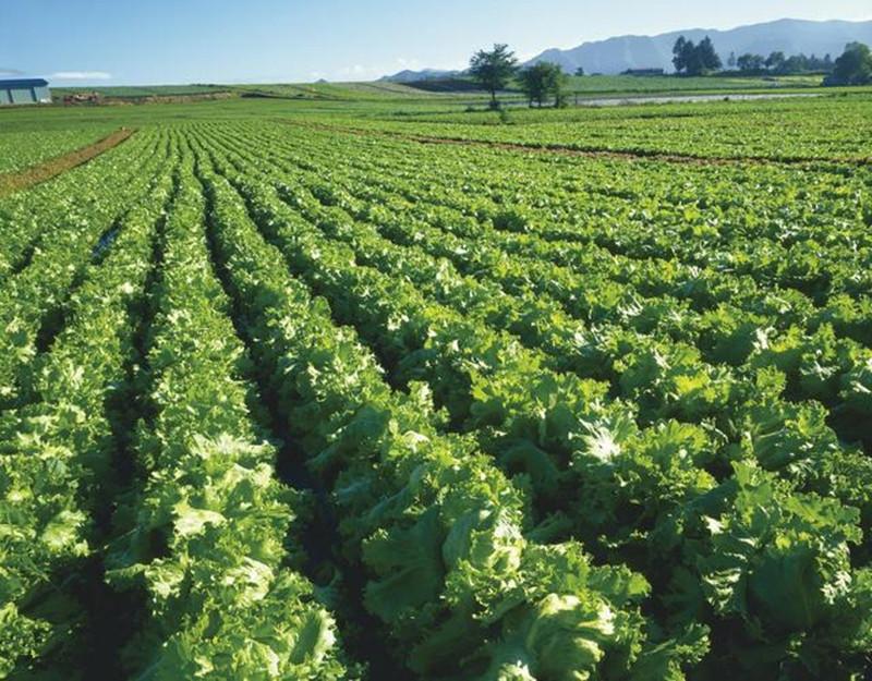 发展订单农业,谁来帮农民找订单?