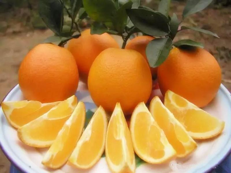褚橙、赣南脐橙、新奇士橙,谁才是我国农业生产模式的未来?