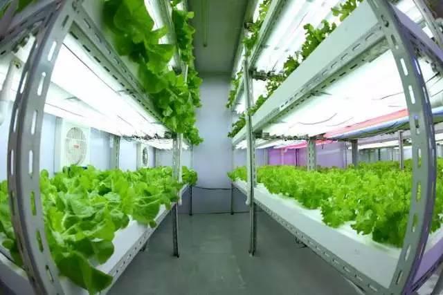 创业小黑板|植物工厂:未来农业方向,蔬菜好吃但难卖