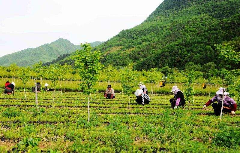 案例|一位驻村村书记的农业经营之道(值得每一个人学习)