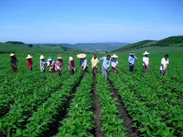 干货|农产品如何注册商标(农业老板必看)