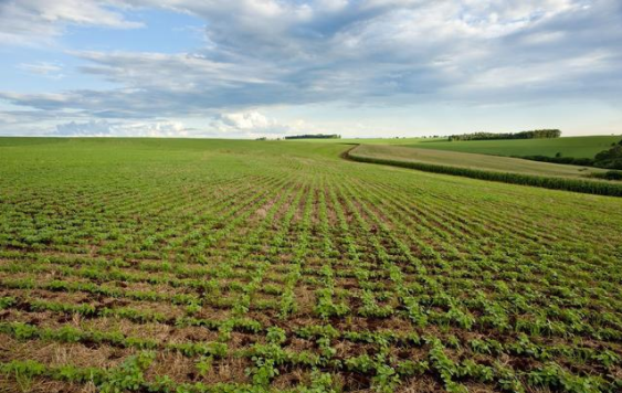 三农日报|地方政府支持中央厨房产业模式;未来中国农产品进口要扩大