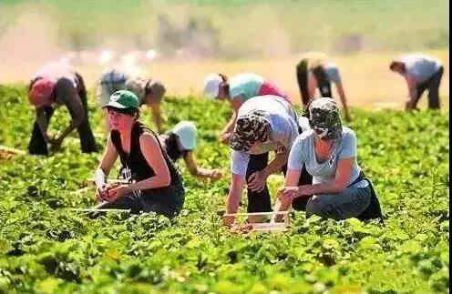 三农日报 有机肥替代化肥补贴:最低1800万;订制农业:最棒的农业生产方式