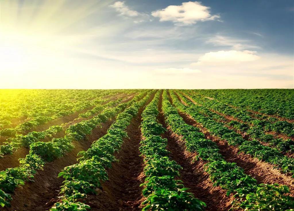 三农日报 90后创业者最容易犯的5大错误;稻蟹混养:立体高效生态农业模式;