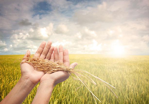 农业领域IP如何打造?(附3个商业案例)