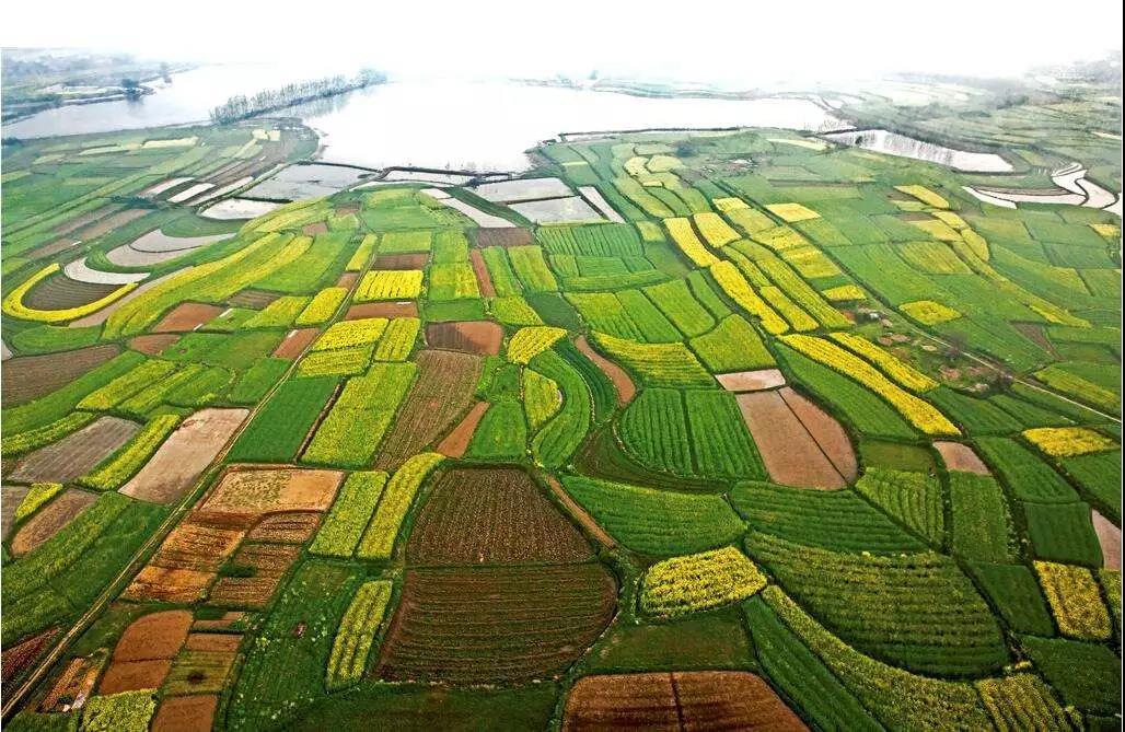 重磅发布 政策倾斜!长江经济带农业或将巨变...