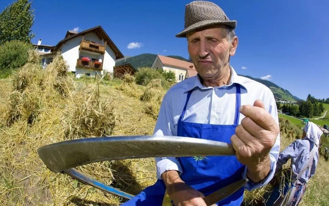汗颜!国土面积小,又毫无资源优势!意大利农业却能雄霸世界