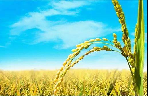 农业众筹:蓝海、新市场,但时机还不成熟!(附5大新玩法)