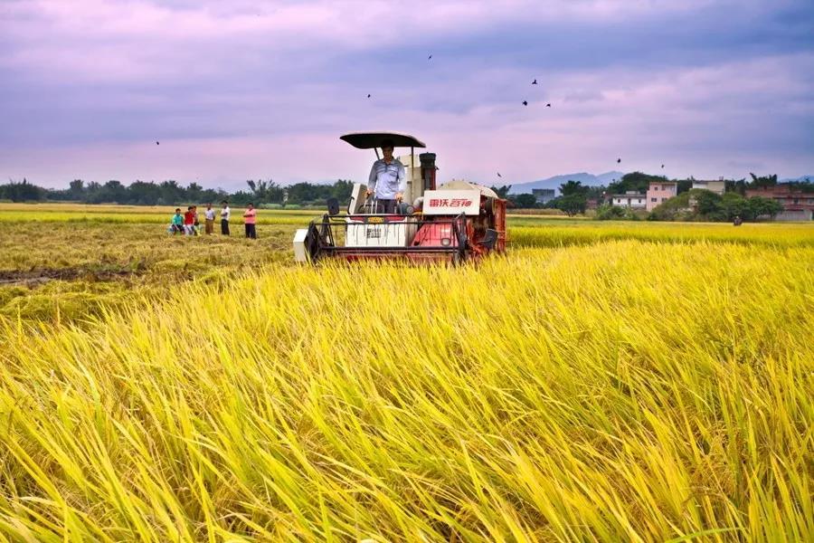 三农日报|报告:我国生鲜企业可分为七种模式;油莎豆有望成为大豆重要替代性原料