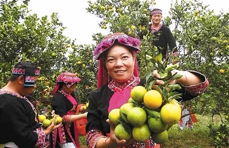 县域新经济|特色农产品品牌化如何撬动县域经济