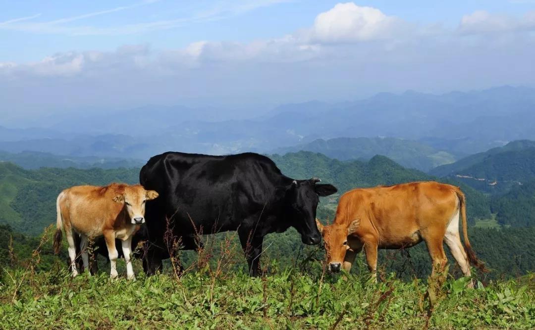 三农日报|正邦集团董事长:支持农业规模化发展;未来中国农业四大发展趋势