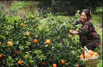 电商平台抢夺农产品源头资源 谁盯上了农产品?