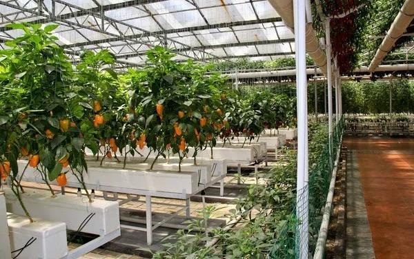 重磅|农产品化学含量,中国是荷兰的30~50倍,农产品品质要如何把控?