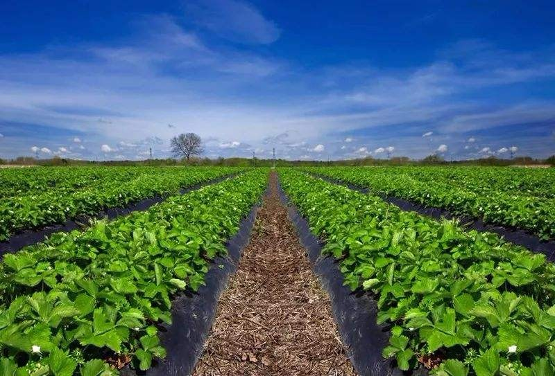 深度解码!农业产业化联合体:农业利益分配新模式!
