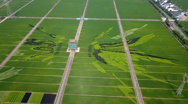 三农日报|中央财政投入100亿扶持农产品加工;数据:我国的生鲜平均损耗率在10%以上