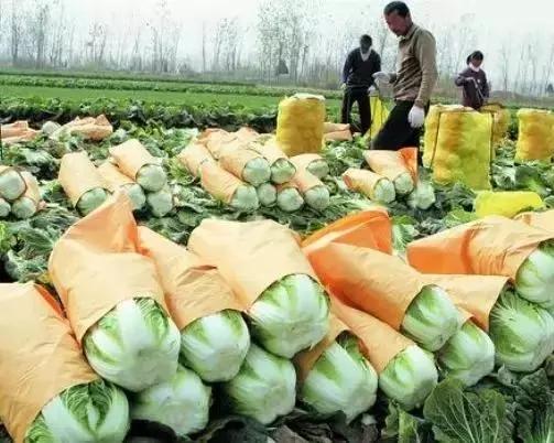 农产品营销:造势之后如何造名?