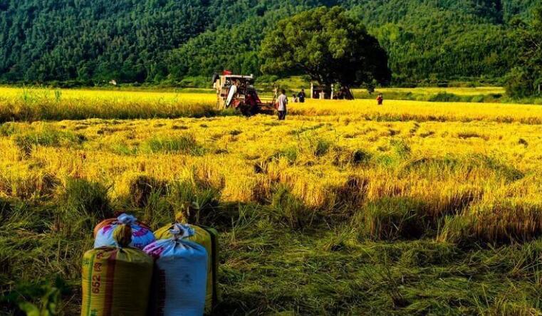 中国地标农产品系列报道|万年贡米的蝶变之道