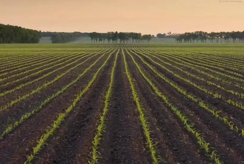 三农日报|土地入市或将加码;乡村旅游将获1000亿贷款支持;转基因主要作物:转基因大豆