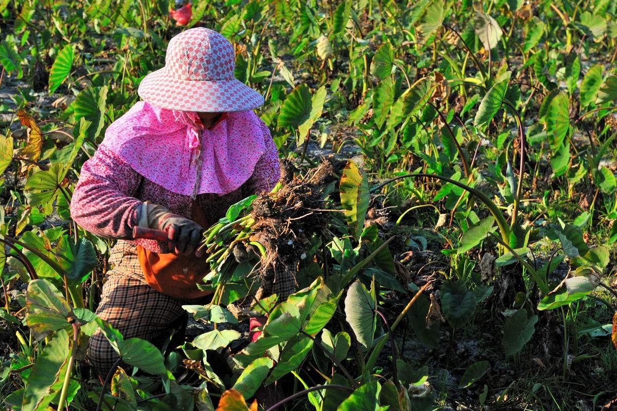 中国农产品迎来最好的年代:爆品、网红、IP