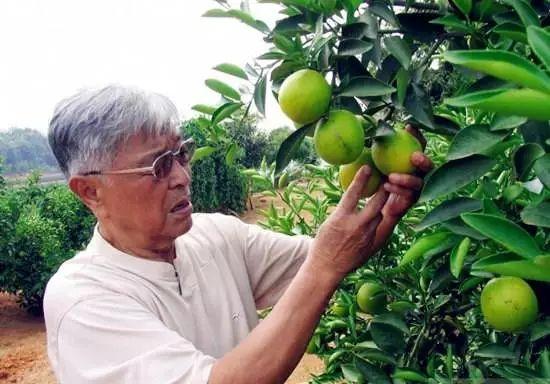 """深度解析!中国农业需要下一个""""褚橙"""""""