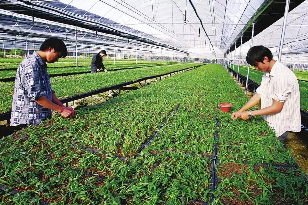 三农日报 中国农业机器人产出规模完爆美国;我国农产品加工转化和增值率低