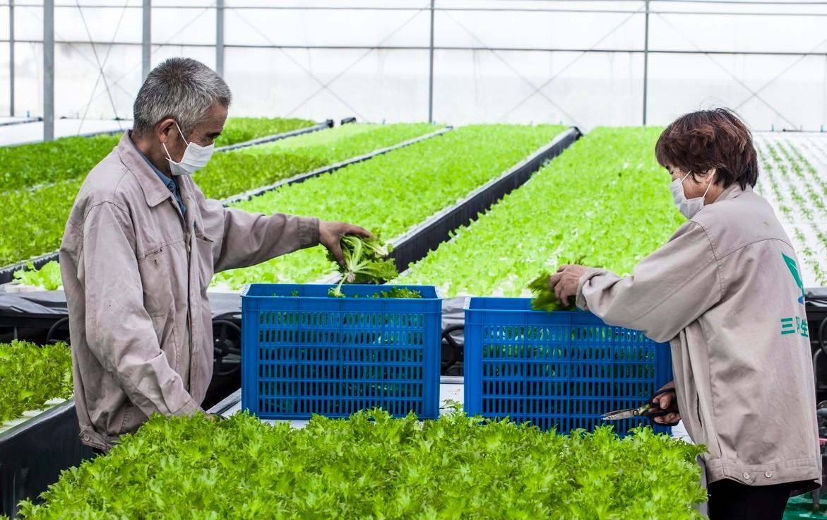 农产品加工业深度不够!但中国种养业加速向农产品加工业延伸