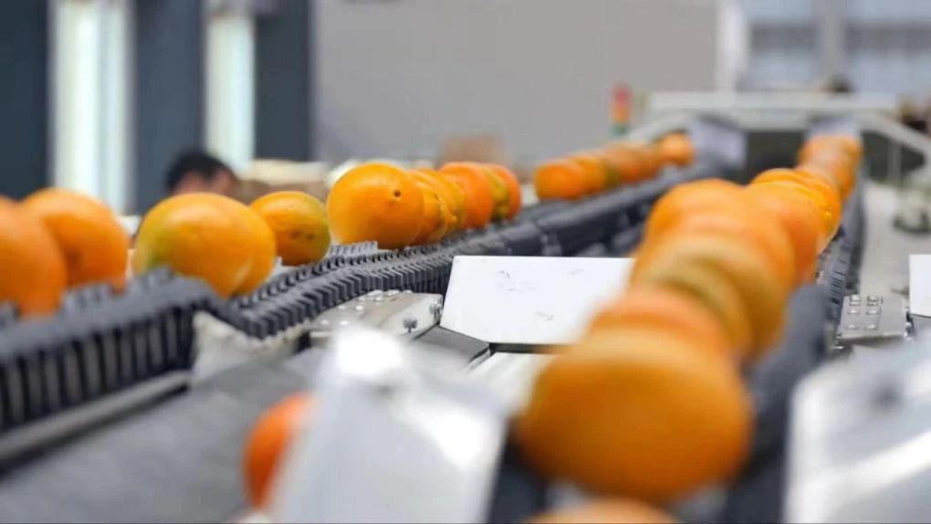 除了运得更多更远更快 中国果业还需要什么?