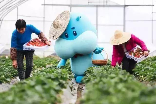 如何为农产品搭建稳定的销售渠道?中化、阿里、京东、百果园的做法是……