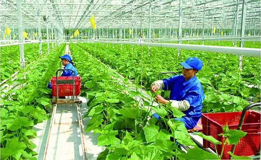 农业产业周报|三只松鼠、百果园、京粮、首农等最新消息;本周5个融资事件