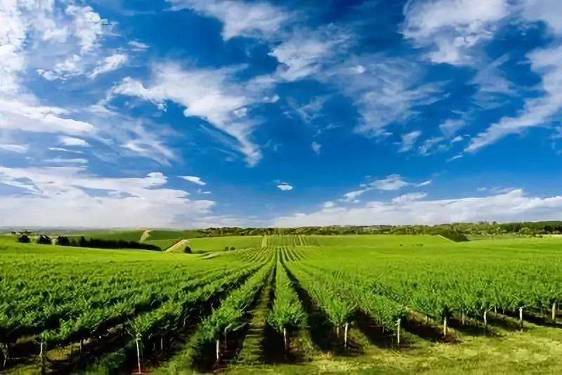 三农日报|数据显示:功能农业潜力巨大;报告:农业科技公司偏爱大数据领域