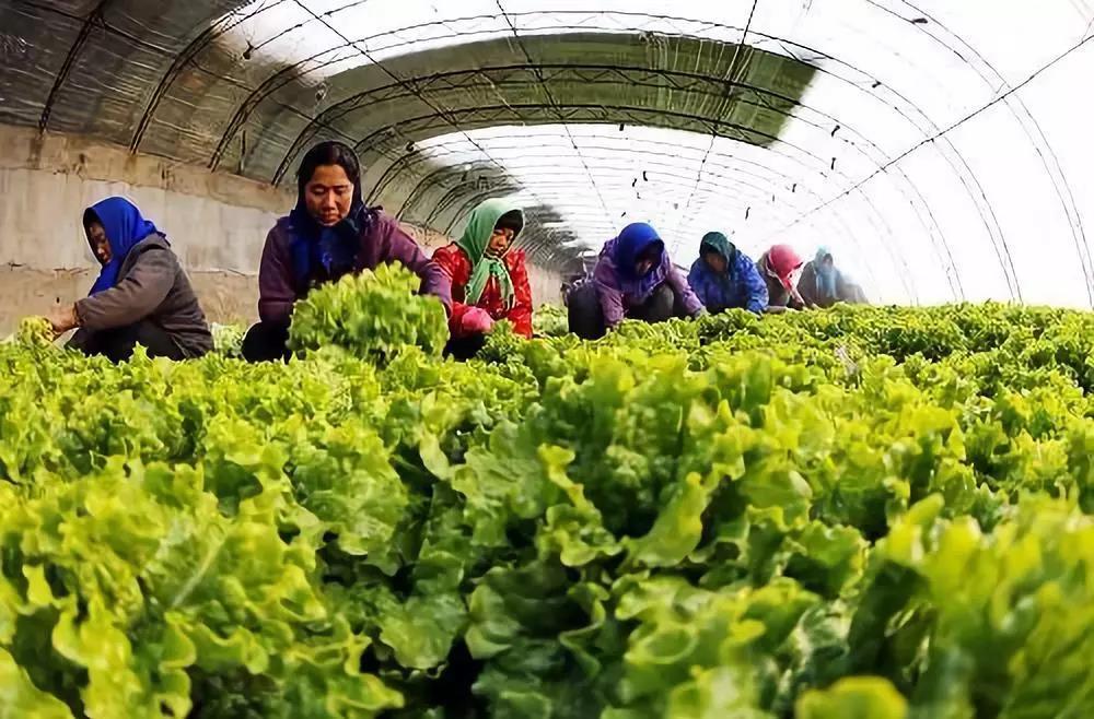三农日报|数字农业大迎来快速发展期;未来农产品流通的四大趋势