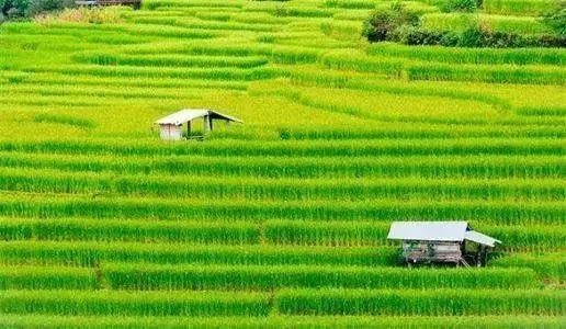 深度分析|2020年农业行业的发展趋势及未来农业的前景分析