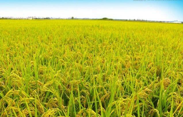 【政策】农业农村部:禁止外商在中国投资转基因种子生产