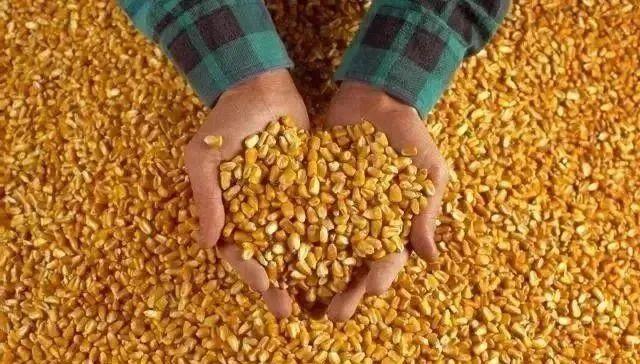 【行业分析】中国农业:给农民一条活路,给自己一条退路